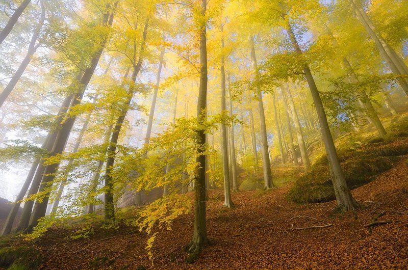 доброе утро картинки с лесом осенним