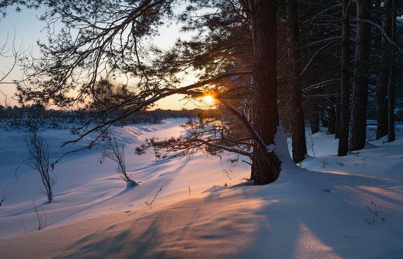 вечер, мороз, сосняк Морозный вечер.photo preview