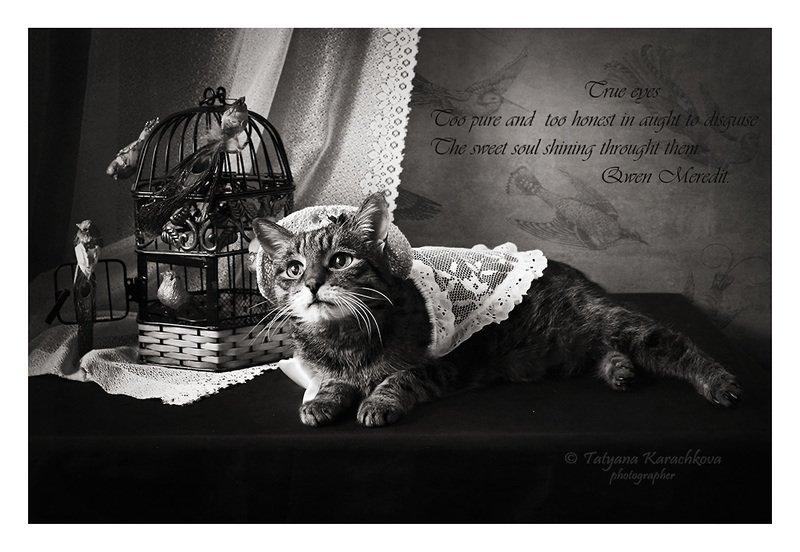 натюрморт, кошка, клетка, птичка, открытка, карточка, шутка Гла-Муррные карточкиphoto preview