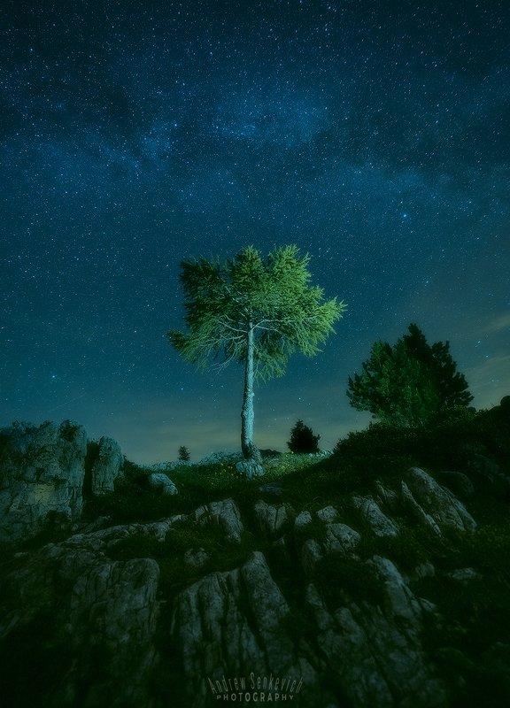 доломиты, dolomiti, dolomites, night, ночь, milky way, млечный путь, дерево Ночной пейзажик из летних Доломит 2photo preview
