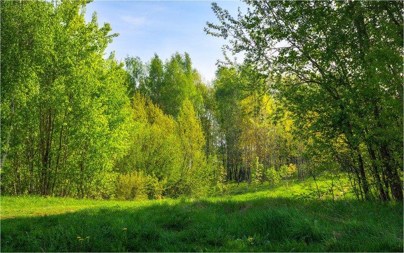 лес, весна, лес, День Весныphoto preview
