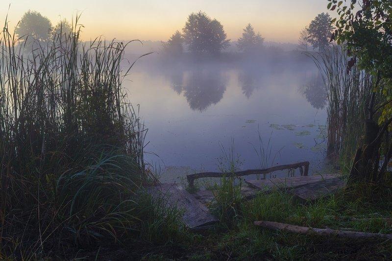 пейзаж,природа,туман,дерево,река,Сергей Корнев,трава,утро Река в туманеphoto preview