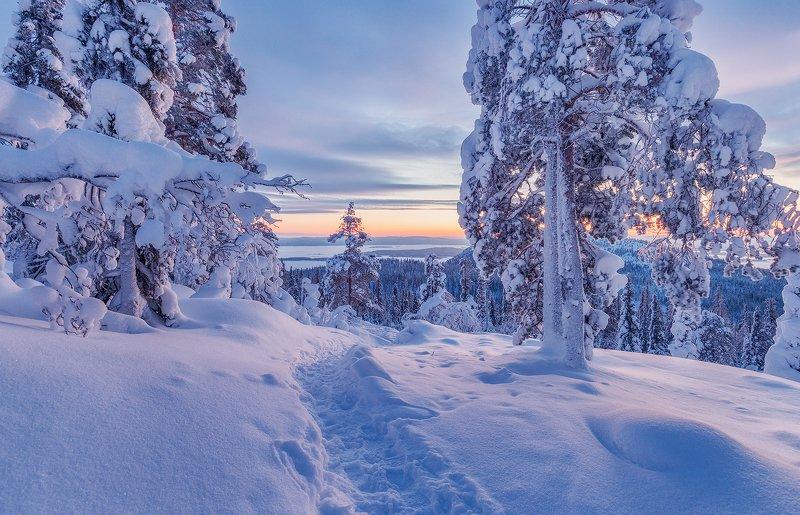 снег, горы, ели, кандалакша, закат Заполярьеphoto preview