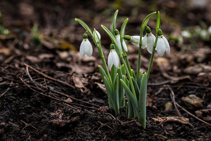 Весна пришлаphoto preview