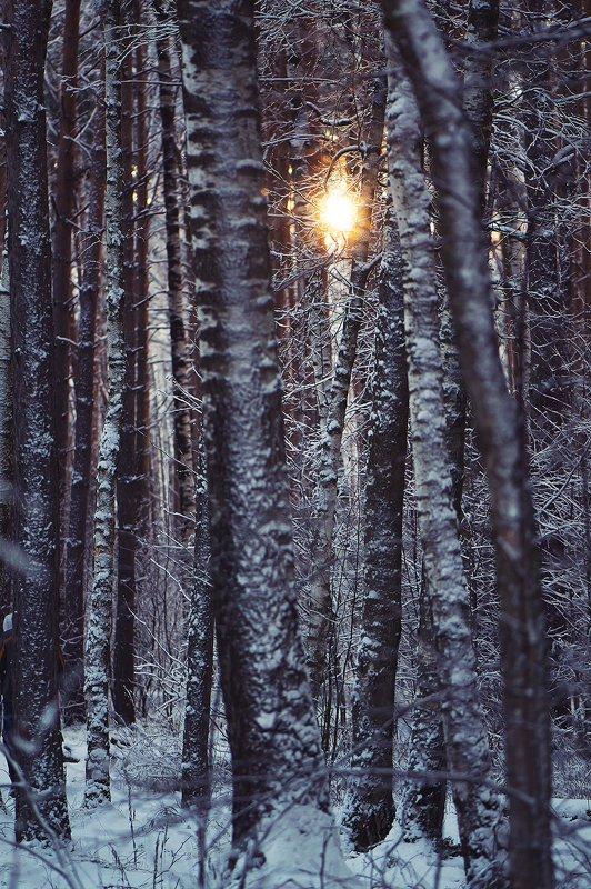 зима, снег, зимний лес, солнце, иней Графика зимнего лесаphoto preview
