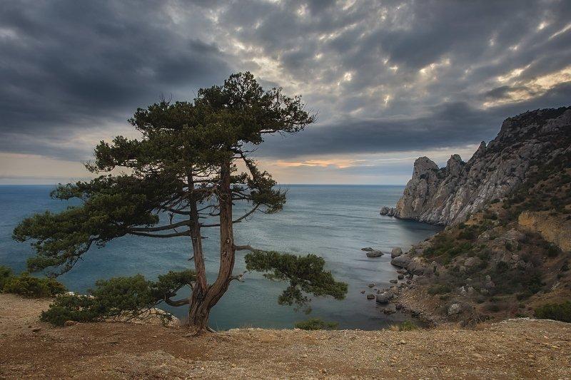 можжевельник, вечер, закат, зима, путешествие, крым, новый свет, пейзаж, море, облака Можжевельникphoto preview