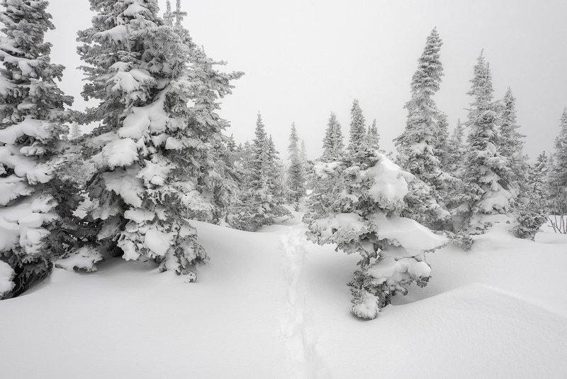 снег, следы, заячьи следы, иней, снежные узоры, мороз, кедры, берёзы, гора зелёная, зима, шерегеш, горная шория, сибирь Там на неведомых дорожках ... ;)photo preview