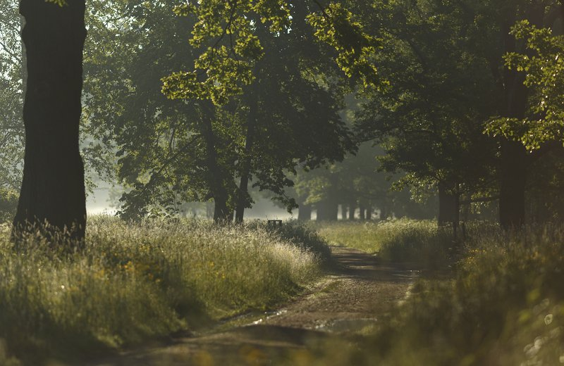 питер, пушкин, царскоесело, царское, баболовскийпарк, пейзаж, природа К свету . . .photo preview