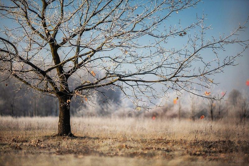 зима пейзаж Инейphoto preview
