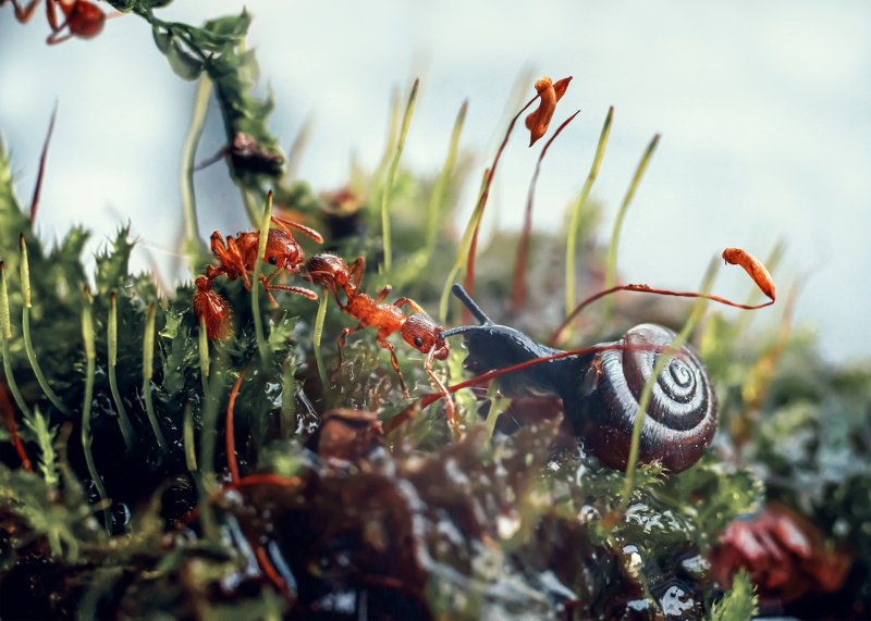 макро муравьи улитка природа мох Знакомствоphoto preview