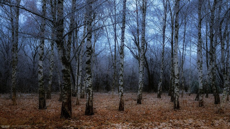 пейзаж природа осень березы мороз сумерки Поздняя осень... Легкий морозphoto preview