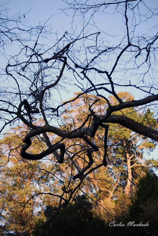 Landscapes, Abstraction, Street/Reportage Branches in Sintraphoto preview
