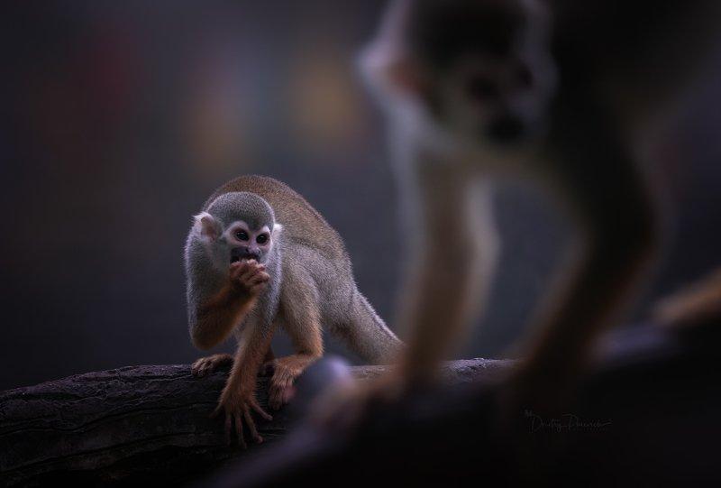 природа, животные, птицы, вьетнам, остров фукок Заинтересованные взглядыphoto preview