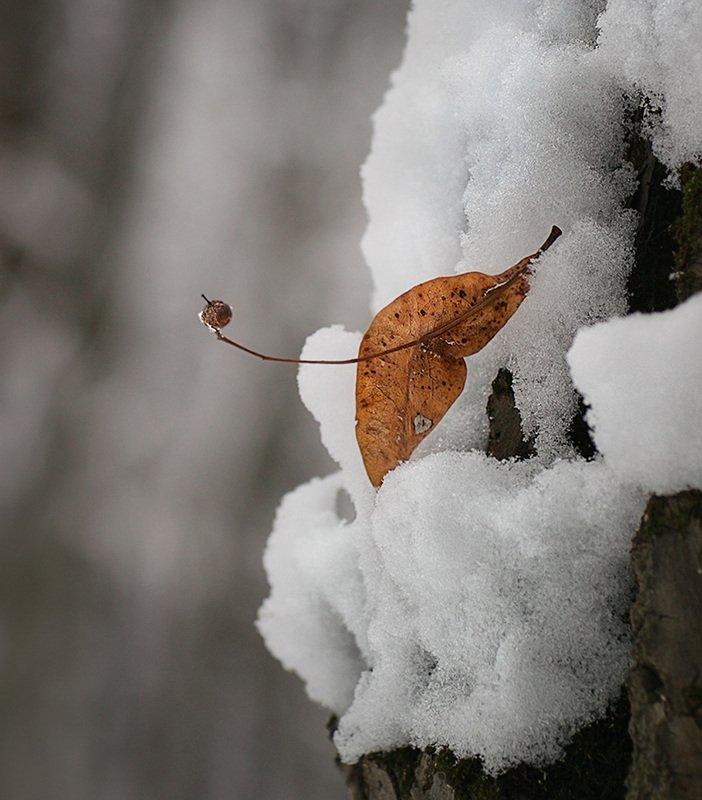 зима, снег лист Осенний приветphoto preview