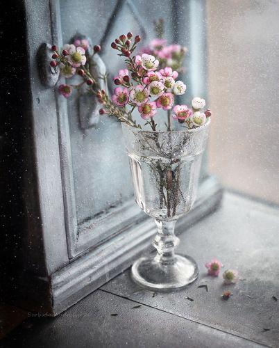о розовом цветке*