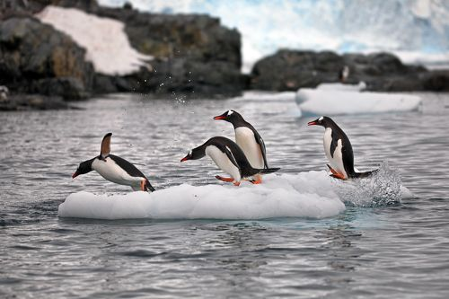 Пингвиньи истории - 3