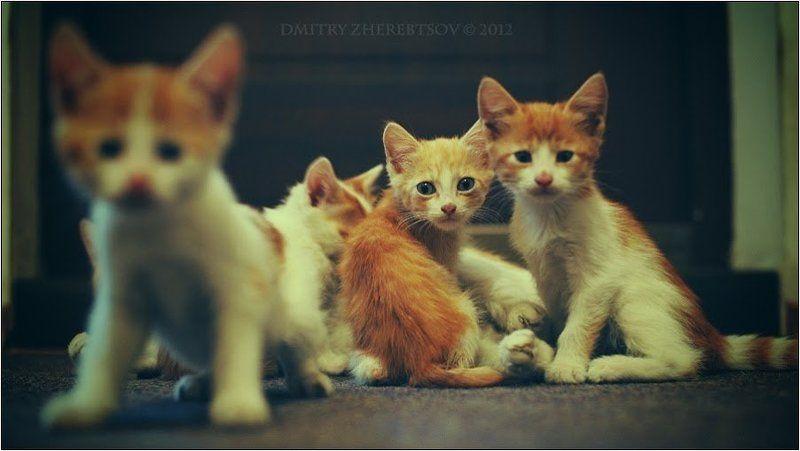 Рыжая семейкаphoto preview