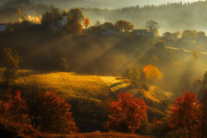 Foggy autumnphoto preview