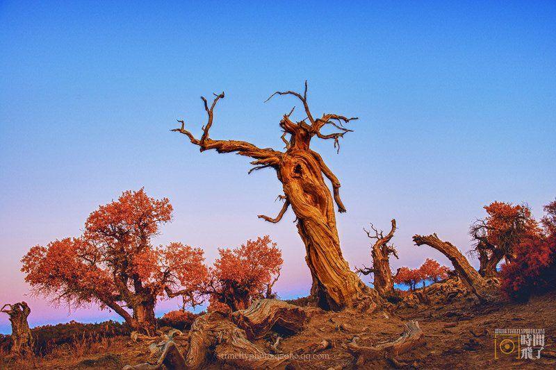 Desert dancerphoto preview