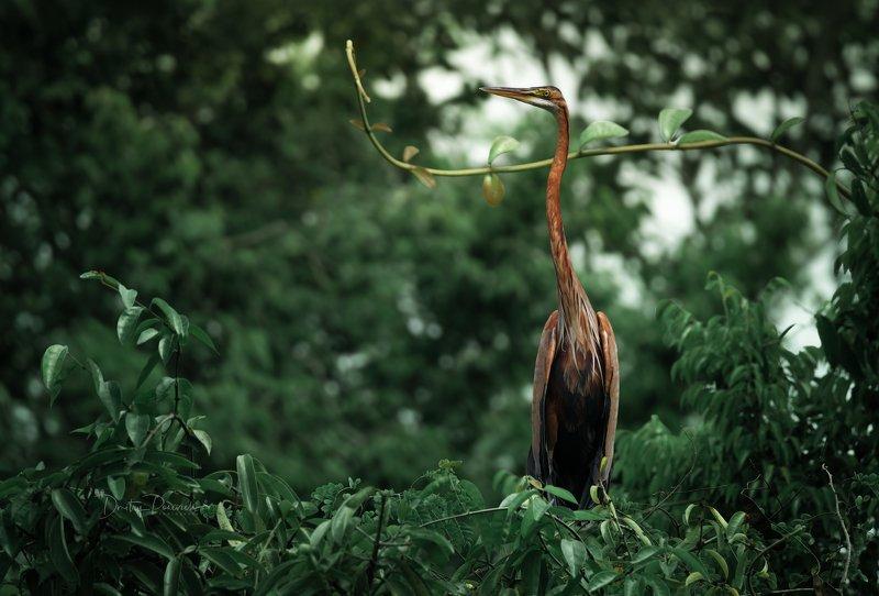 природа, животные, птицы, вьетнам, остров фукок Графиняphoto preview