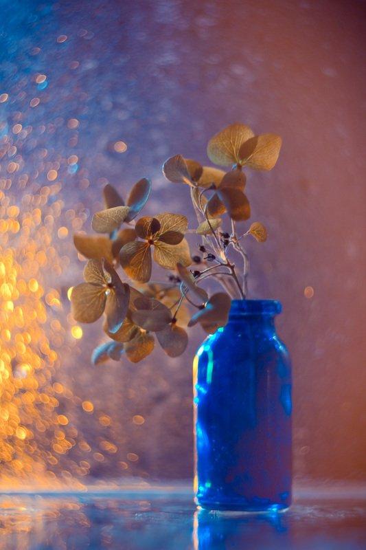 натюрморт, боке, прозрачный, закат, солнце, бутылка, стакан, стекло, красивый, гортензия, цветок, блики, still life Вечерняя гортензияphoto preview