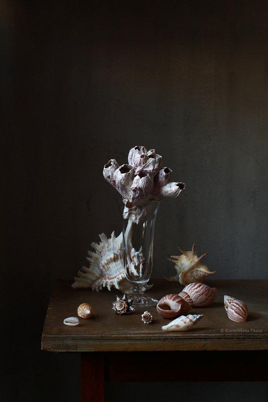 натюрморт, ракушки Seashellsphoto preview