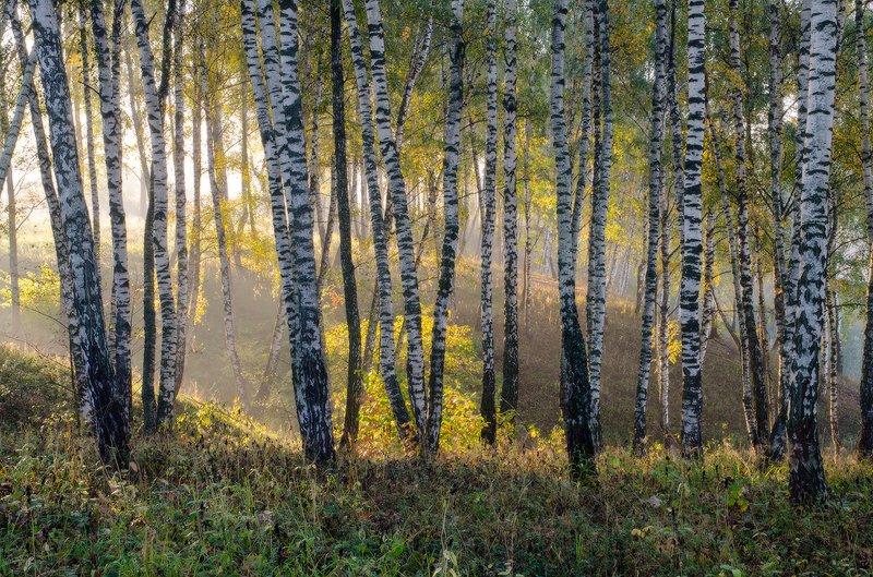 калужская обл. березовый рай IIphoto preview