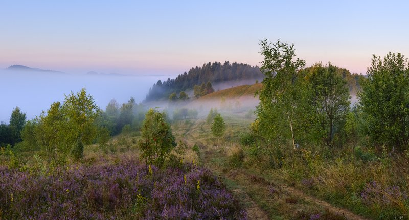 утро, рассвет, лето, холмы, туман, прикарпатье, природа, пейзаж, лес, березы, панорама, morning, dawn, hills, light, fog, nature, panorama, carpathian, forest, misty, summer, foggy, landscape Туманное утро на холмахphoto preview