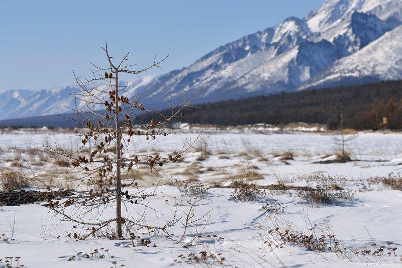 байкал, природа, пейзаж, сибирь ***photo preview