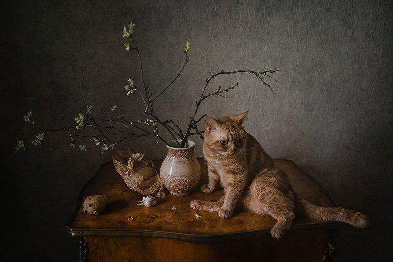 животные, кошки, кот, натюрморт, ветки, картофель Скоро весна, всё распускается :)photo preview
