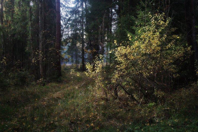 сергей алексеев, пейзаж В октябреphoto preview