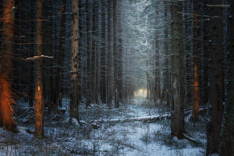 лес, зима, ель, тропа, вечер, чаща Лес в начале зимыphoto preview