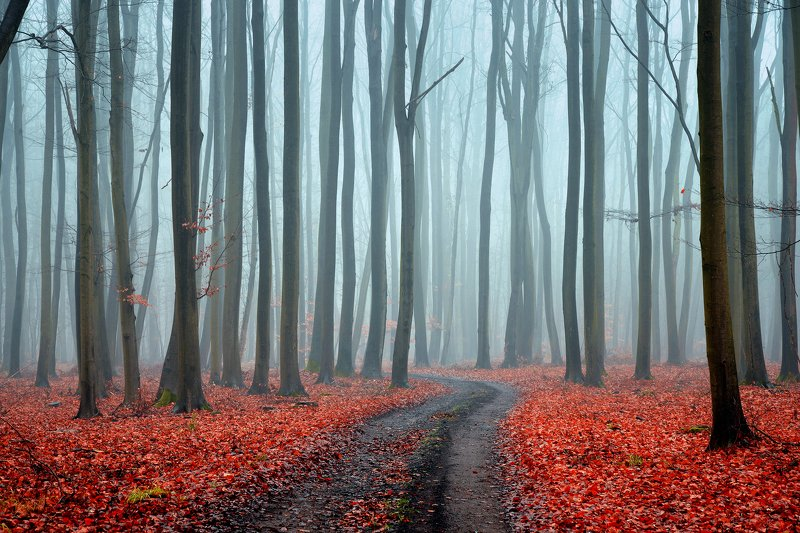 misty forest red fog morning foggy road path las tree magic mist trees wood autumn dranikowski в туманном лесу в туманном лесуphoto preview