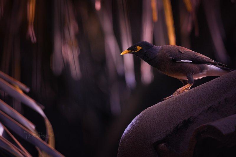 природа, животные, птицы, вьетнам, остров фукок На крыше дома своего ...photo preview