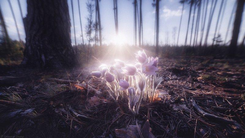 украина, коростышев, природа, лес, полесье, сон трава, свет, весна, лес, сказка, гармония, волшебство, мгновение, самянг 14, вечер, закат,  тишина, уединение, счастье, жизнь, воздух, чистый, вдохновение,  деревья, фотограф, чорный, \