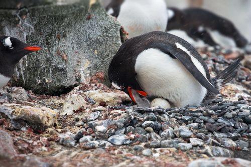 Пингвиньи истории - 4