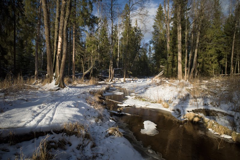 зиа.лес,снег,река январь похожий на веснуphoto preview