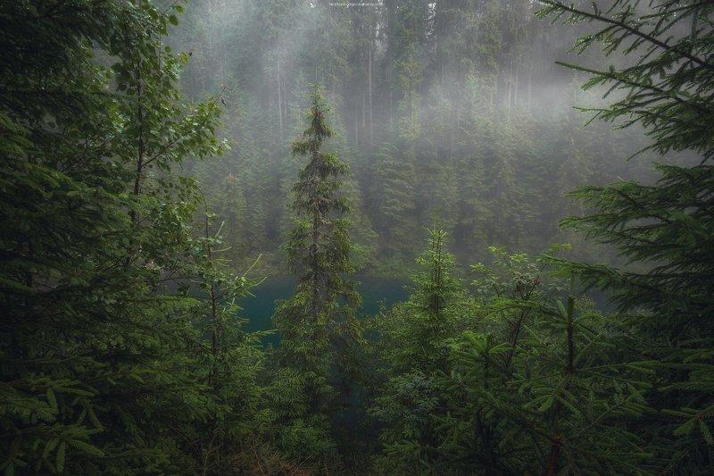 природа, лес, деревья, зелёный, озеро, туман, капли, карпаты После грозыphoto preview