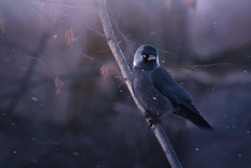 природа, лес, животные, птицы Завьюжилоphoto preview