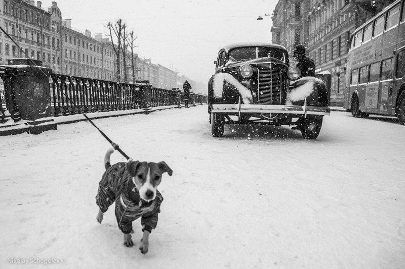 собака, чб, стрит, старый автомобиль, петербург Интересуютсяphoto preview