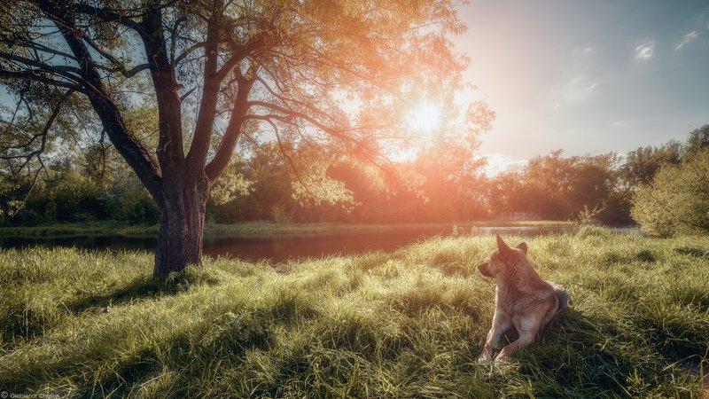 украина, коростышев, природа, полесье, озеро, тишина, уединение, счастье, жизнь, собака, созерцание, сказка, солнце, тепло, счастье, вдохновение,  жизнь, фотограф, чорный, Сияниеphoto preview