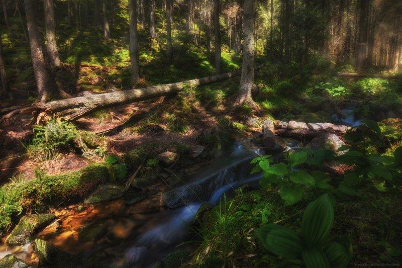 родник, ручей, горы, лес, природа, лето, мох, камни, свет, карпаты photo preview