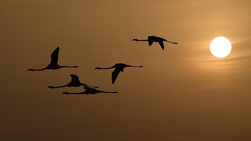 птицы birds Заходящее солнцеphoto preview