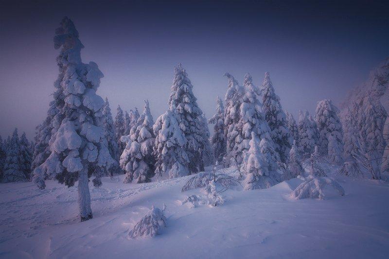 таганай, урал, горы, зима, лес Занесенные метелямиphoto preview