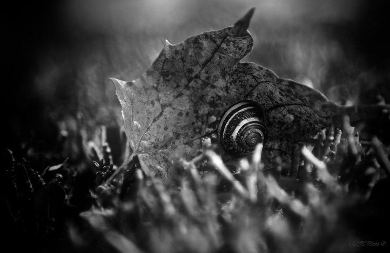 snail, leaf, bokeh, b/w I have found my shelterphoto preview