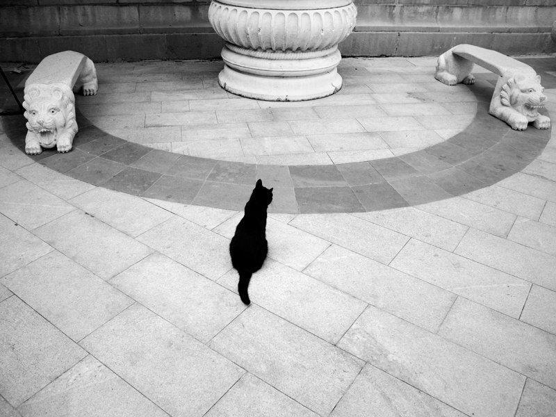 кот, жинр, животные * * *photo preview