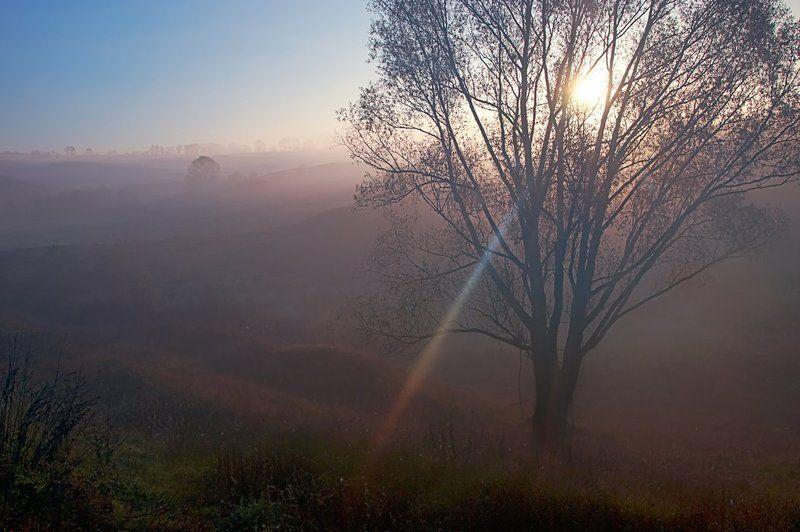 осень, дерево, туман, луч. первые лучи - 2photo preview