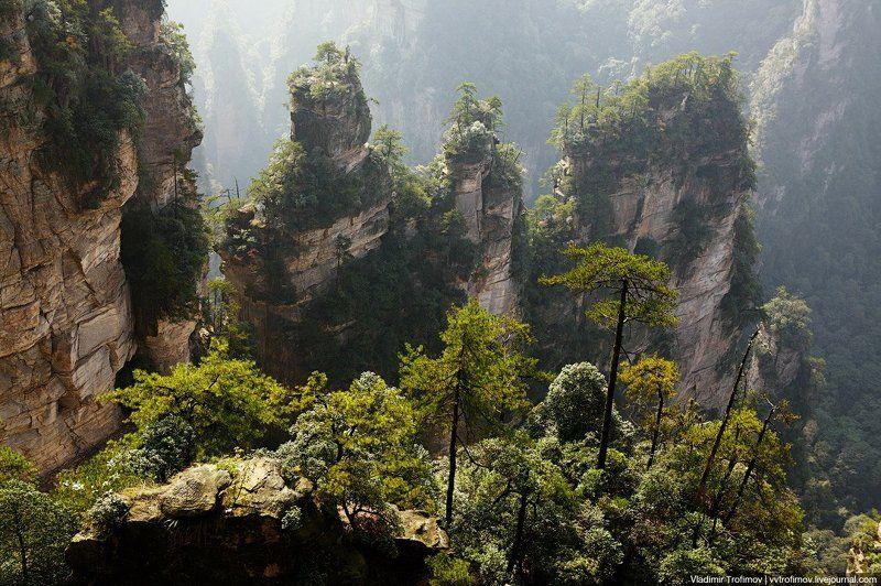 zhangjiajie, china О камнях и деревьяхphoto preview