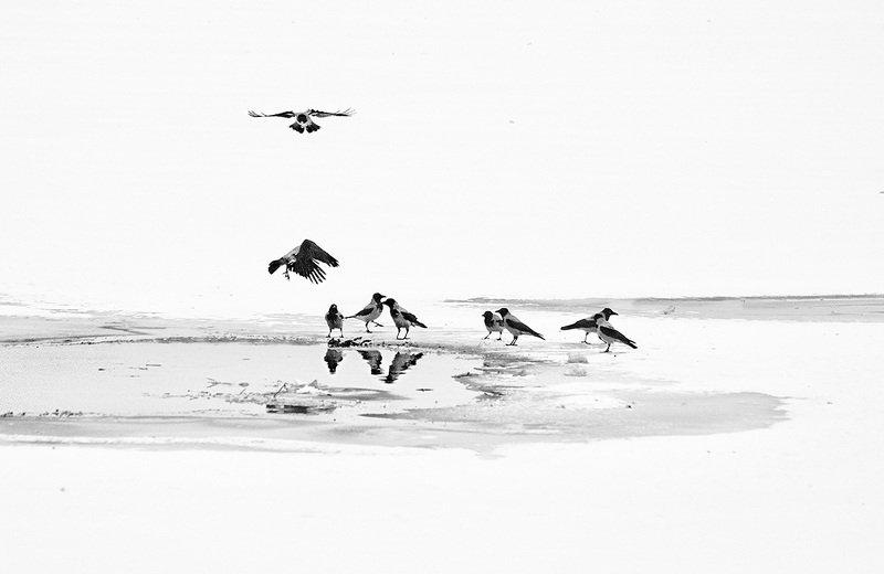 Птицы на зимнем прудуphoto preview