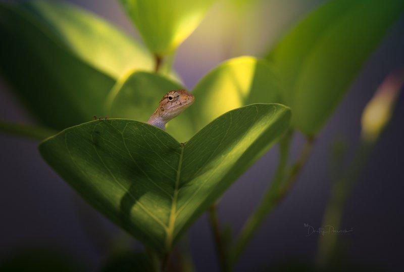 природа, животные, птицы, вьетнам, остров фукок Сердцеедкаphoto preview